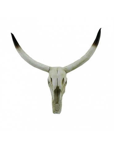 Skull - Long horn