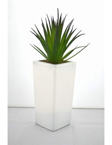 Plant Vase