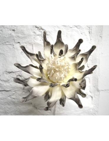 White acaena